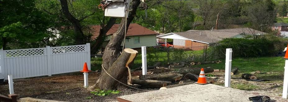 Tree Felling Pretoria East