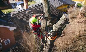 Tree Felling Craighall